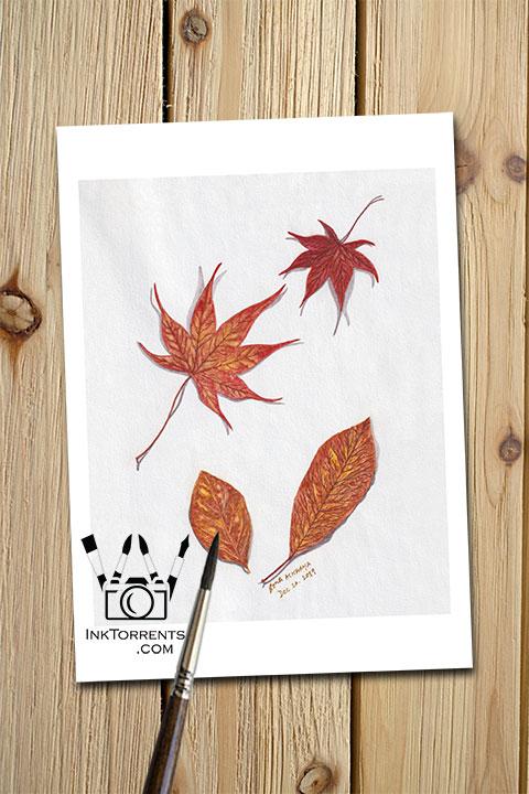 Falling Autumn Leaves Fall Colors art print InkTorrents Graphics Soma Acharya