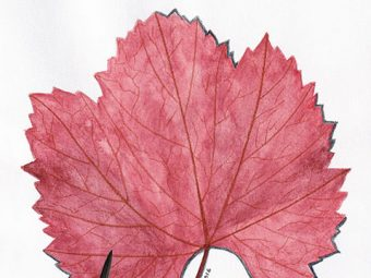 Autumn Red Leaf art print InkTorrents Graphics Soma Acharya