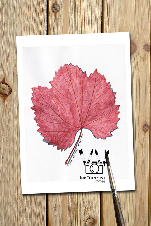 Autumn Red Leaf Fall Colors art print InkTorrents Graphics Soma Acharya