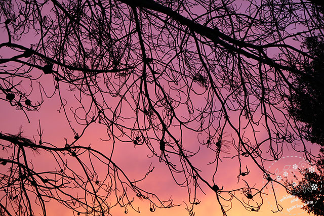 Stormy Pastel Autumn Sky | Whims And Fancies