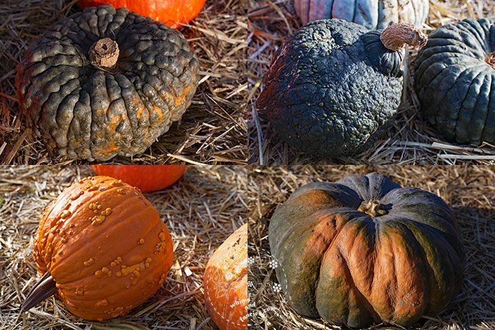 Autumn Weird Pumpkins | Whims And Fancies