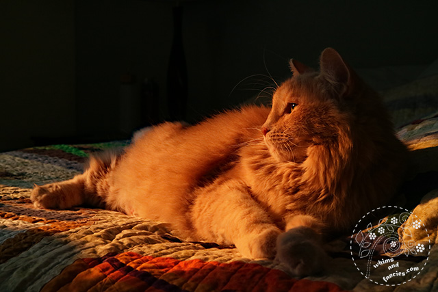 Charlie Cat On Harry Potter Quilt | Whims And Fancies