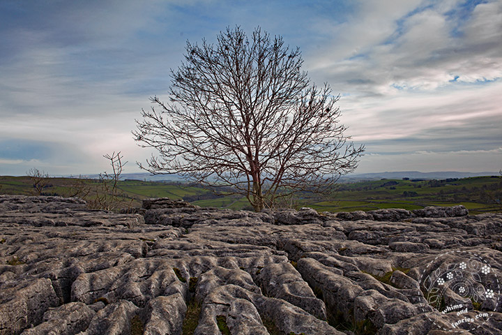 Malham Cove Yorkshire | Whims And Fancies