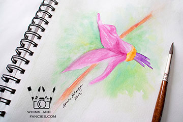 Shooting Star Wildflower watercolour painting