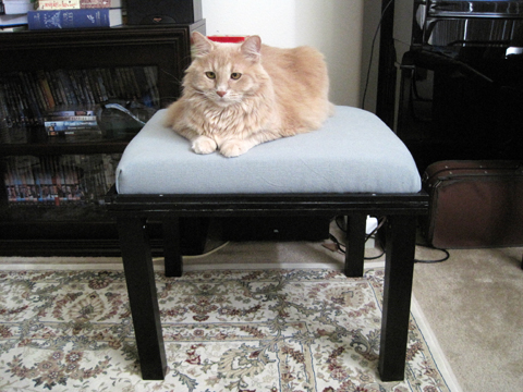 Charlie on the homemade kitty bed