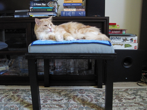 Finished Kitty Bed made at home