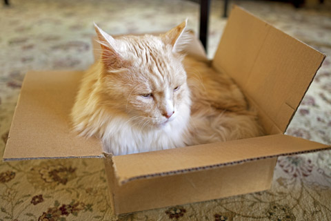 Cat In A Box | Whims And Fancies