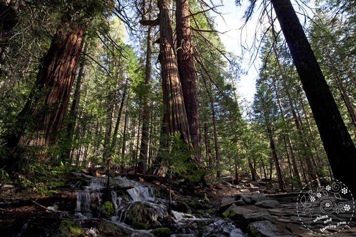 John Muir Trail, Yosemite National Park | Whims And Fancies