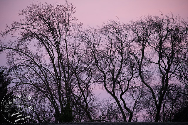 Bare Winter Trees Sunset East | Whims And Fancies
