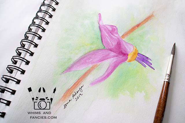 Shooting Star Wildflower Watercolour Painting | Whims And Fancies