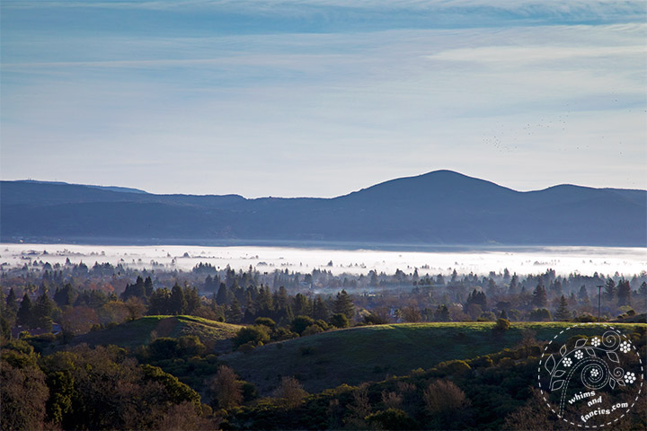 California Wine Country Morning Fog Photography | Whims And Fancies
