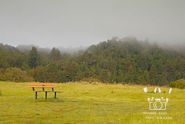 Misty Mornings In Northern California Wine Counntry | Whims And Fancies
