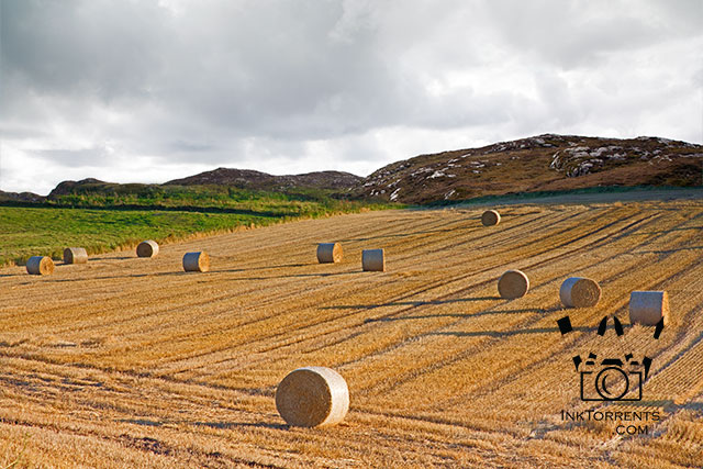 Hay Bales Of Aberdeenshire Scotland Art Print InkTorrents Graphics Soma Acharya