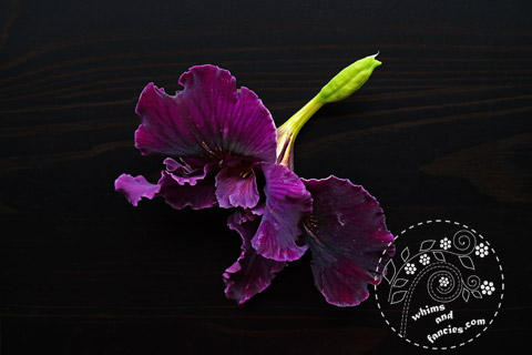 Deep Purple Douglas Iris | Whims And Fancies