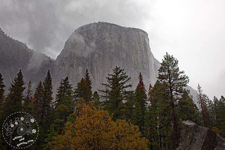 Yosemite National Park Photo | Whims And Fancies