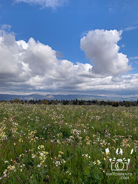 Northern California Wildflowers in Napa @ InkTorrents.com by Soma