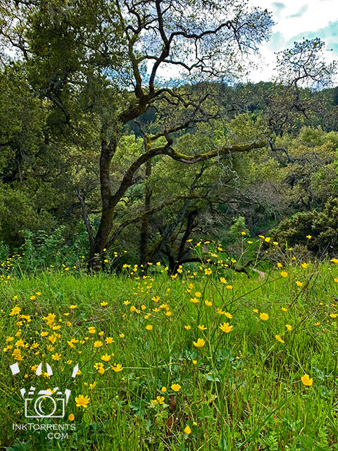 Northern California wildflowers at local park in Napa @ InkTorrents.com by Soma