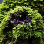 Wandering Camera – Woodland Walk